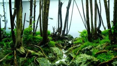 5 Tanaman Terbaik untuk Aquascape, Jangan Sampai Salah Pilih