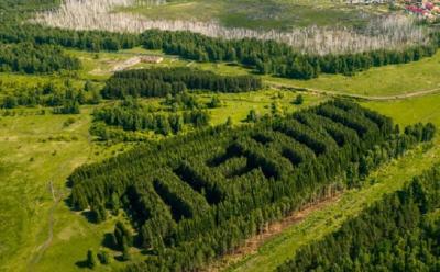 Hutan Pinus Ini Dibentuk Nama Tokoh Revolusi Komunis Uni Soviet