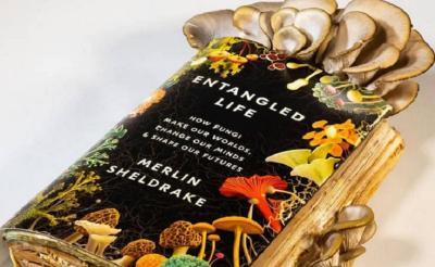 Ahli Biologi Ini Tumbuhkan Jamur pada Buku, Memasak dan Memakannya Sendiri