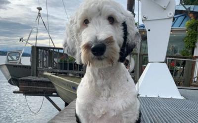 Jenius, Anjing Ini Bisa Berkomunikasi dengan Papan Suara