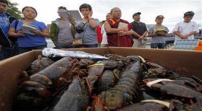 Ekspor Benih Lobster Harus Bisa Untungkan Nelayan dan Negara