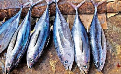 Ini Cara Mengolah Ikan Tuna agar Tak Amis