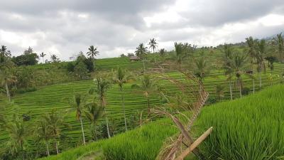 Berkaca di Merauke dan Kalbar, Food Estate di Kalteng Jangan Gagal Lagi