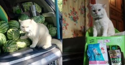 Kenalan dengan Pearl, Kucing Viral Penjaga Semangka