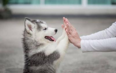 5 Tips agar Anjing Kesayangan Hidup Lebih Lama